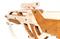 Сборная деревянная модель TARG 0046 INVADER - фото 10387