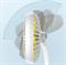 Настольный вентилятор Baseus Pudding-Shaped Fan (CXBD-02) - фото 13580